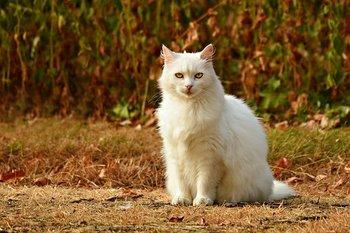 白ネコ.jpg